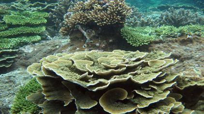 海底世界13