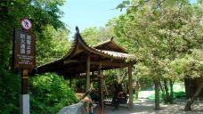珙桐园-张家界-AIian