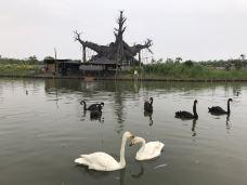 大纵湖-盐城-e23****46