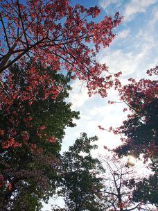 西湖公园-泉州-Chayla