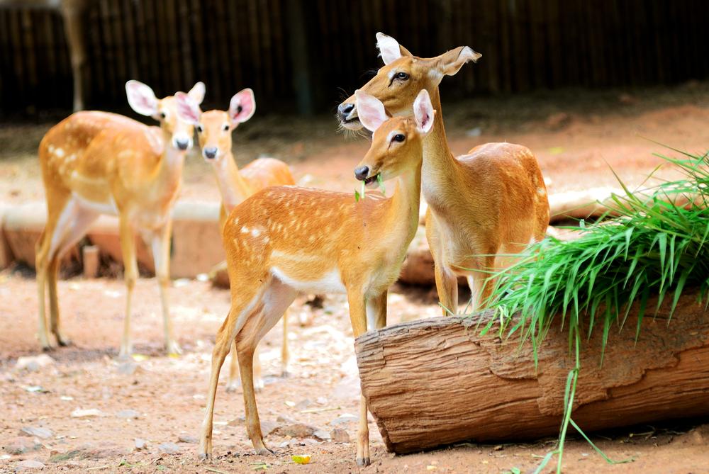 律實動物園  Dusit Zoo   -1