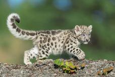 青岛森林野生动物世界-青岛