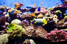 S.E.A.海洋馆-圣淘沙岛-C-image2018