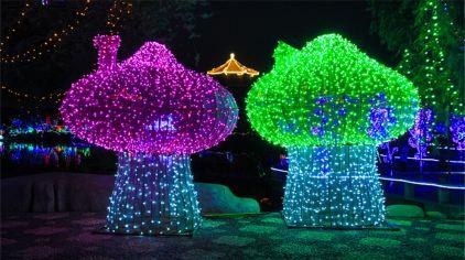 中国翰园灯光节 (3)