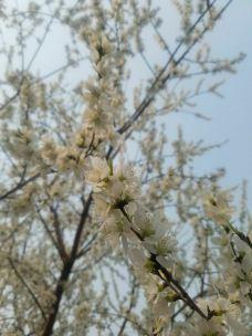 南湖公园-长春-青秀杨桃