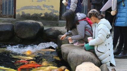 杭州海皇星生态乐园135704 (27)