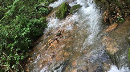 森林氧吧 (6)