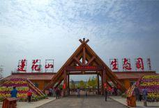 莲花山生态园-枣庄