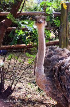 肯尼亚山动物孤儿院-纳纽基-寂寞的西瓜
