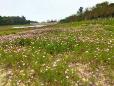 黄山鲁森林公园-广州-梦幻潮汐