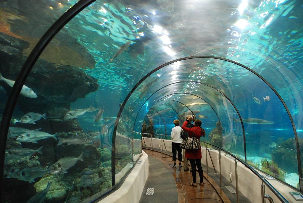 バルセロナ水族館入場チケット