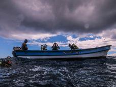 南设得兰群岛-乔治王岛-pxy0705