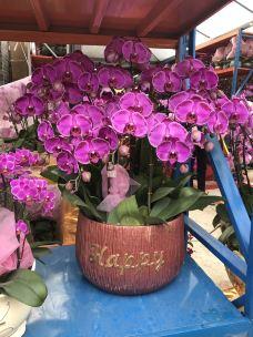 花地湾花鸟鱼虫市场-广州-鱼乐22