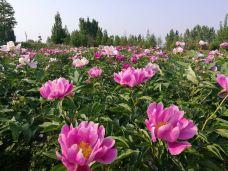 薛国百花园-枣庄-AIian