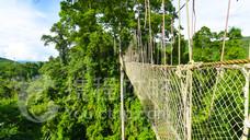 西双版纳热带雨林国家公园望天树景区