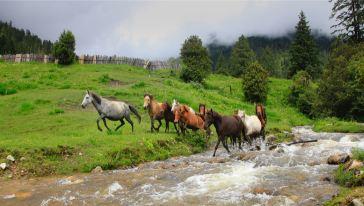 鲁朗花海:牧场中的马踏激流