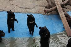 小黑熊展区-南通-AIian