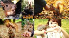 松鼠王国-松鼠部落森林假日公园-成都-C_image