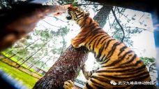 九峰31-九峰森林动物园-武汉-C_image