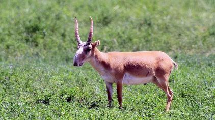 神州荒漠野生动物园1(新2016-9-7)