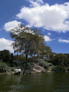 奈瓦沙湖-纳库鲁-pekingwang