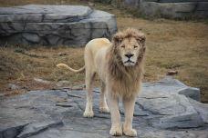 非洲狮展区-南通-AIian