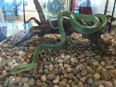 毒蛇研究中心-普吉岛-第二号爱人