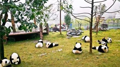 卧龙大熊猫数字信息有限公司10