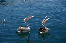 Birds of Eden-Greater Plettenberg Bay