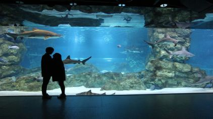 coex水族館-hana (4)