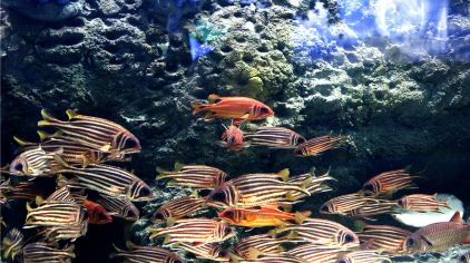 潍坊欢乐海底世界 (17)