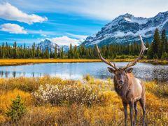 加拿大落基山美景4日游