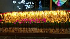 青岛华秀灯光节-青岛-AIian