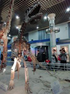 北京自然博物馆-北京-翩翩起舞81