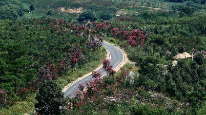 万紫千红植物园