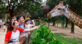 广州长隆野生动物世界长者票(特定日)