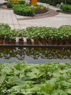 南山植物园-重庆-_WeCh****489074