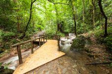莫里热带雨林景区-瑞丽-尊敬的会员