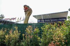 毒蛇研究中心-普吉岛-SUN12999