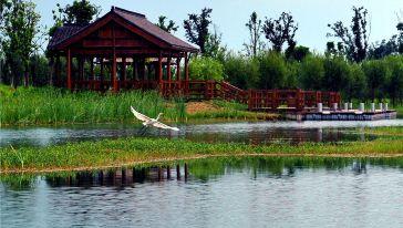 湿地风光候鸟
