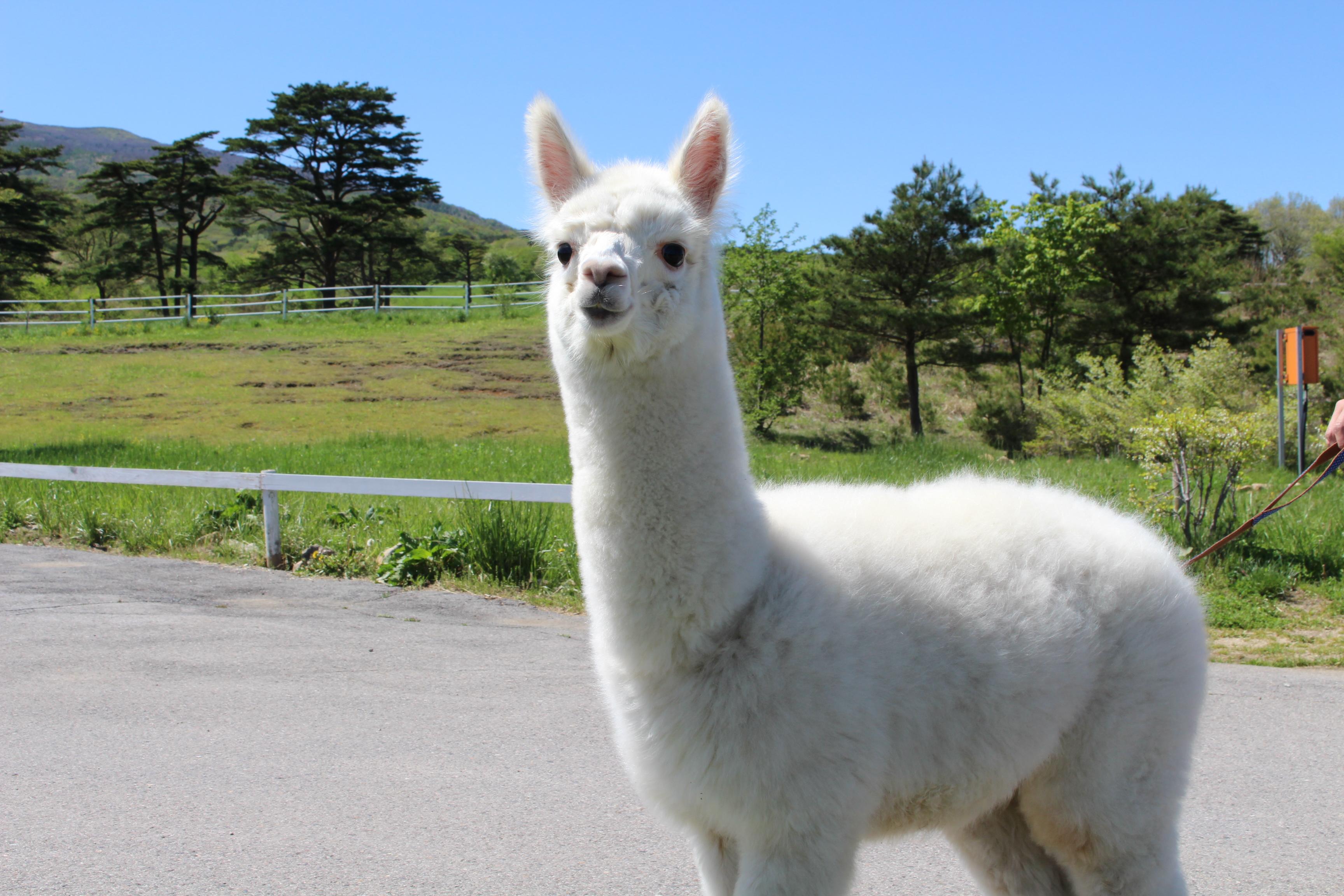 사이타마현 도부 동물공원 입장권