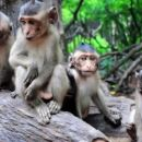 Nha Trang Orchid Island & Monkey Island Day Tour with Private Vehicle and Guide