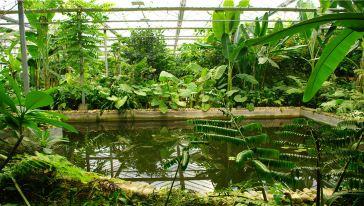 科普植物园热带雨林区