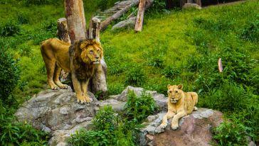 雅戈尔动物园 (9)