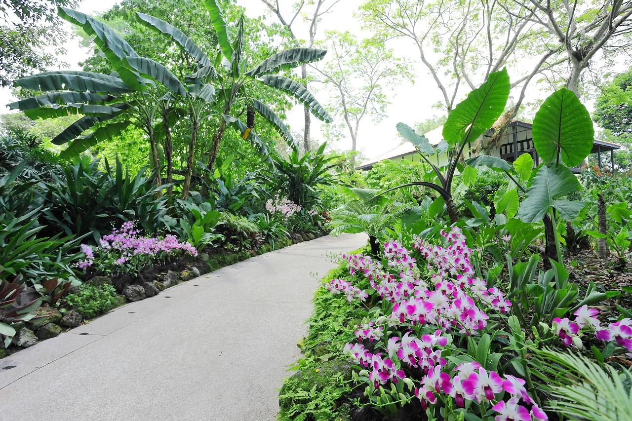 3672-新加坡植物园-1-sy814 (4)