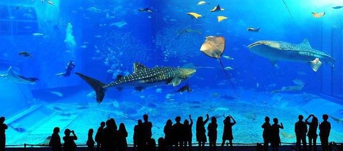 海中道海洋世界+一蘭拉麵總店+二見浦+福岡塔一日遊(提供酒店來回接送)