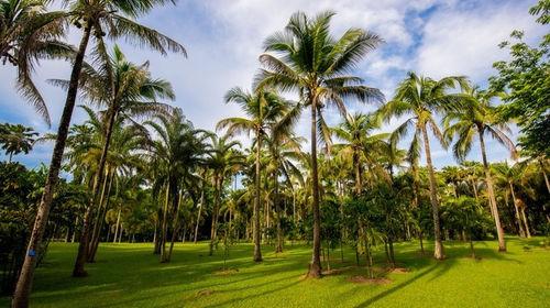 西双版纳 野象谷 西双版纳原始森林公园 热带雨林三日游图片