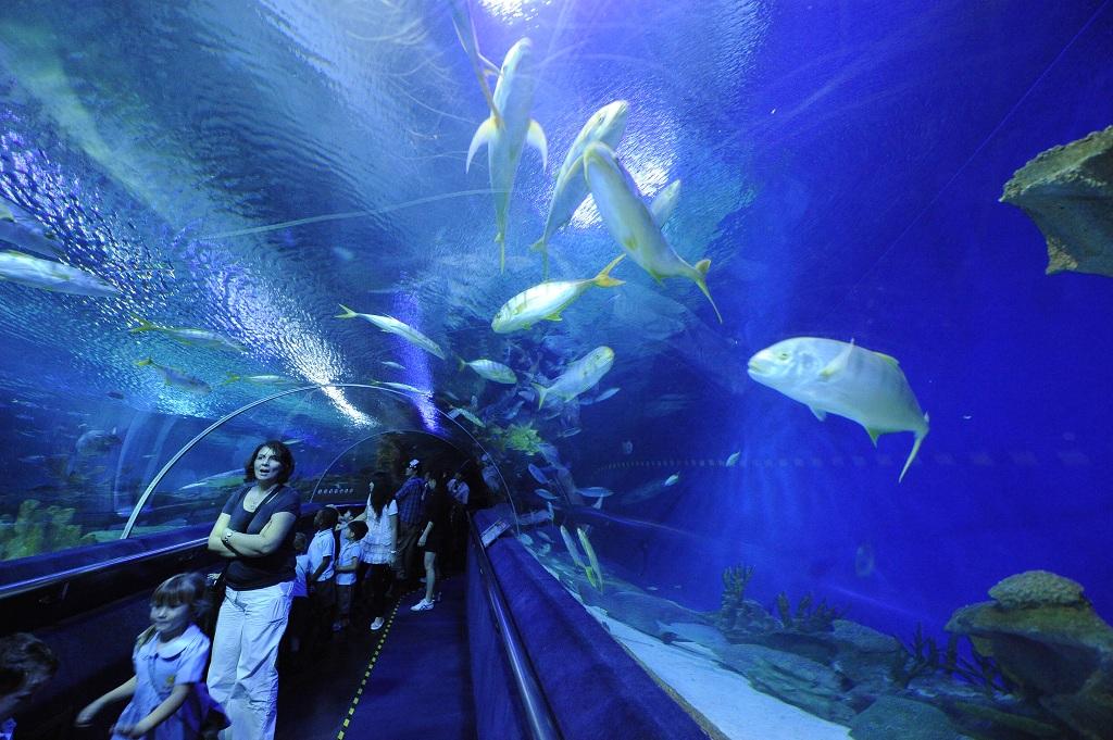 1415964吉隆坡水族馆6