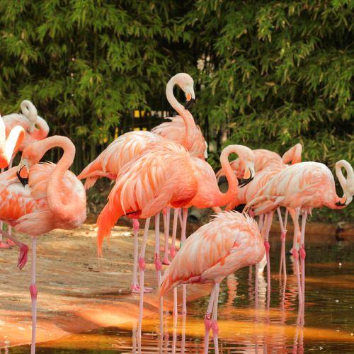 Guangzhou Chimelong Birds Park Ticket