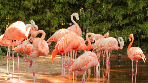 Guangzhou Chimelong Birds Park Ticket